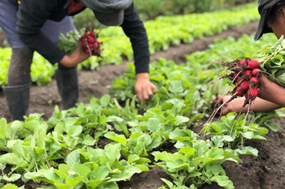 The farms not only produce good quality food; they also create jobs for people in the Cotopaxi area.